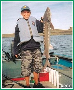 Small Sturgeon